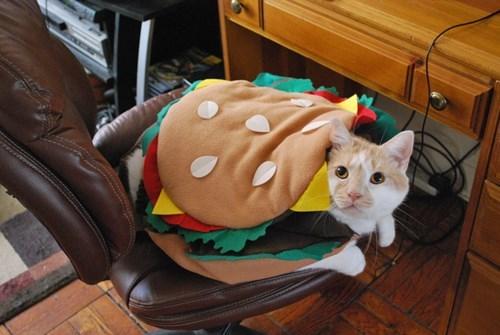 Cute cats - cat dressed as a hamburger