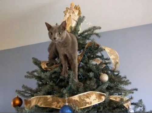 Cute cats - cat stuck on top of Christmas is free
