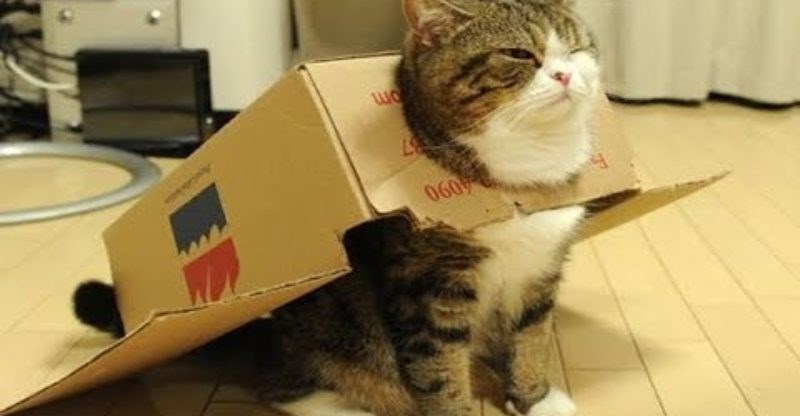 Cute cats - cat wants to be a space pilot