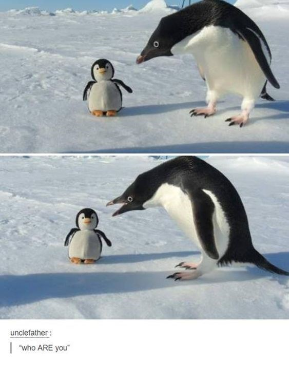 """funny penguins - Bird - unclefather: who ARE you"""""""