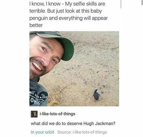 funny penguins - Face - I know, I know - My selfie skills are terrible. But just look at this baby penguin and everything will appear better i-like-lots-of-things what did we do to deserve Hugh Jackman? In your orbit Source: i-like-lots-of-things