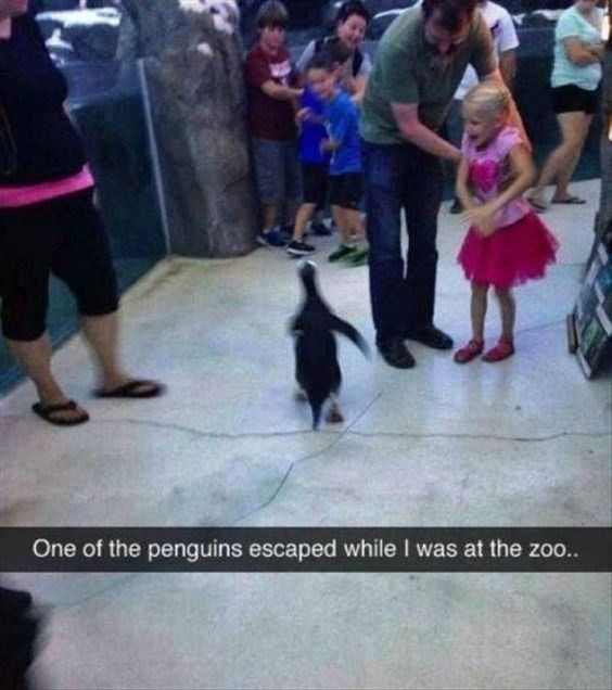funny penguins - Snapshot - One of the penguins escaped while I was at the zoo.
