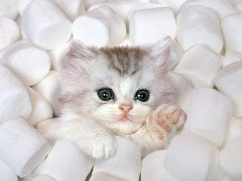 Cute cats - Kitten in a pile of marshmallows waving