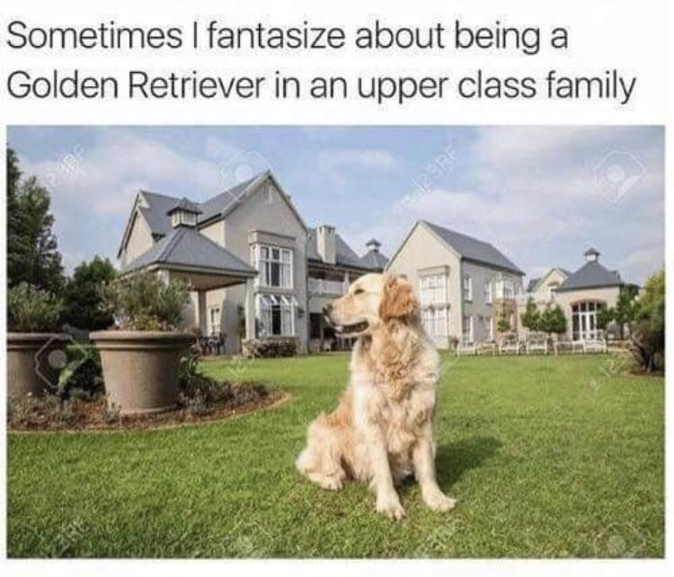 "Caption that reads, ""Sometimes I fantasize about being a golden retriever in an upper-class family"" above a photo of a golden retriever in the backyard of an expensive home"