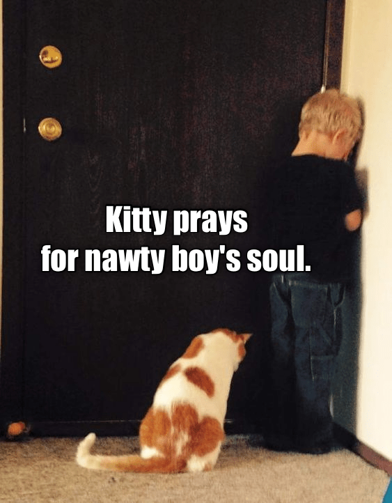 cat meme - Dog - Kitty prays for nawty boy's soul.