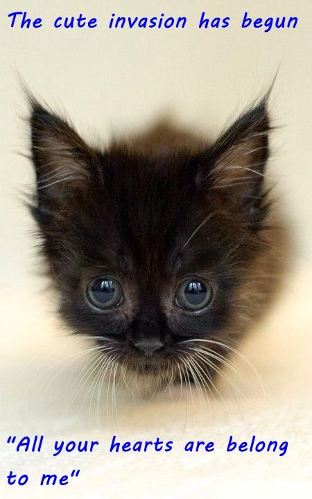 """cat meme - Cat - The cute invasion has begun """"All your hearts are belong to me"""""""