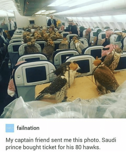 Air travel - FARfailnation My captain friend sent me this photo. Saudi prince bought ticket for his 80 hawks.