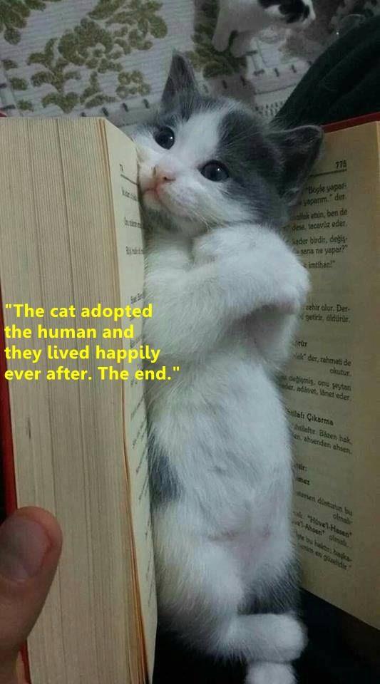 "cat meme - Cat - 775 Bogke yapas aparm der nin, ben de de tecaviz eder der birdir, degis yapar? s sena ne imthan hir alor. Der getiris, dlddrir ""The cat adopted the human and el der, rahrvets de ckutur debimig, onu wyon e, ndlvet, net eder they lived happily ever after. The end."" Saah Cakarma blalts Bhen hak e ahenden ahsen amen dintuun bu clma Hove'lHase Ahen olmala e gdin"