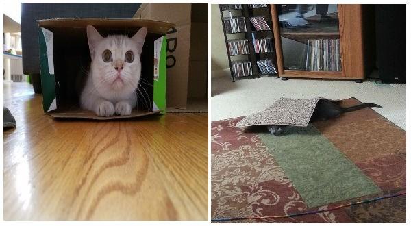 funny cats hiding