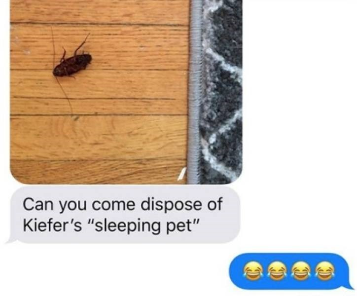 """Insect - Can you come dispose of Kiefer's """"sleeping pet"""""""