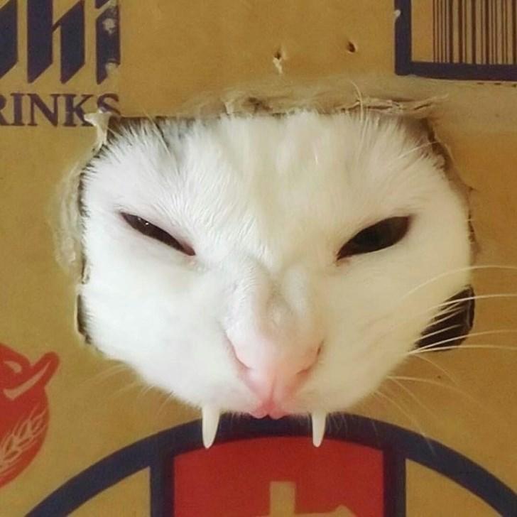 Nose - RINKS