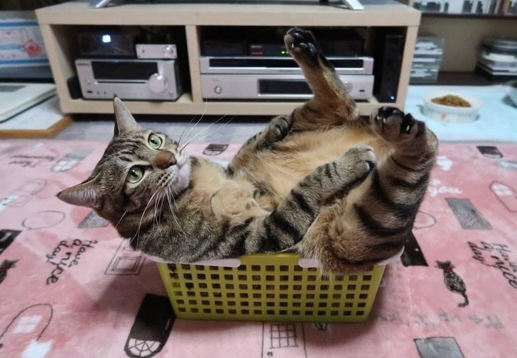 Cat - frop Har hay e