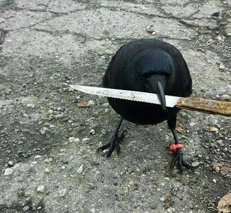cursed image - Bird holding knife