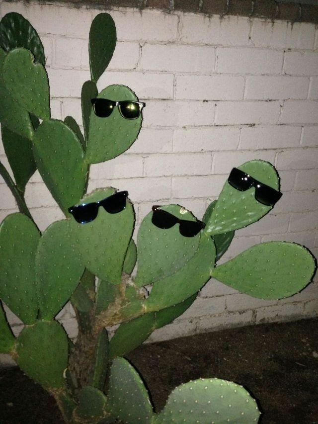 cursed image - Cactus with glasses
