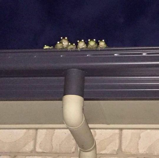 cursed image - Sky and frogs eyes lit up