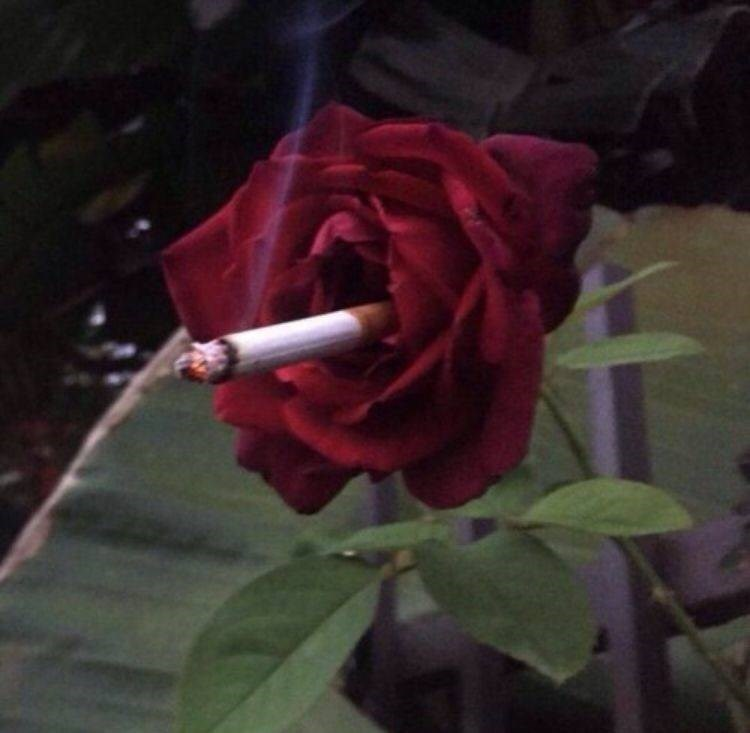 cursed image - Flower with cigarette