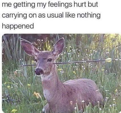 dank memes - Wildlife - me getting my feelings hurt but carrying on as usual like nothing happened