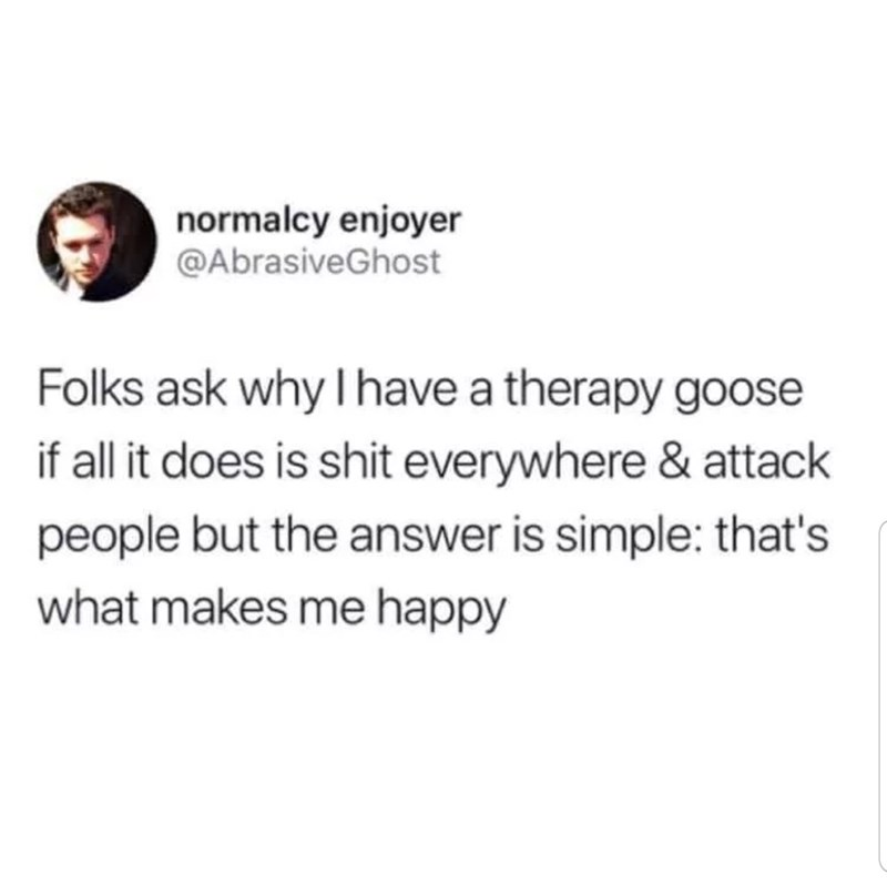 funny tweet - Text - normalcy enjoyer @AbrasiveGhost Folks ask why I have a therapy goose if all it does is shit everywhere & attack people but the answer is simple: that's what makes me happy