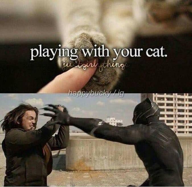 meme - Human - playing with your cat. esigiak gehing happybucky /ig
