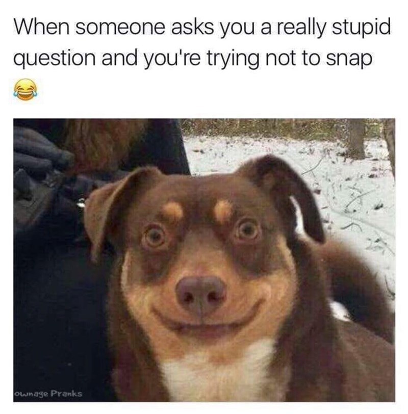 Dog breed - When someone asks you a really stupid question and you're trying not to snap ownage Pranks
