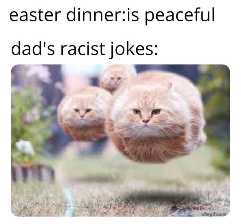 dank memes - Cat - easter dinner:is peaceful dad's racist jokes: