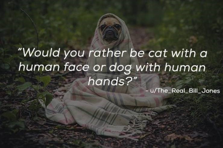 """Photo caption - """"Would you rather be cat with a human face or dog with human hands?"""" u/The_Real Bill Jones"""