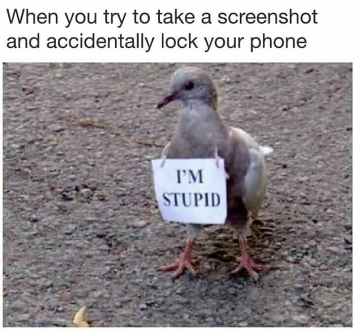 "Caption that reads, ""When you try to take a screenshot and accidentally lock your phone"" above a photo of a bird with a sign around its neck that reads, ""I'm stupid"""