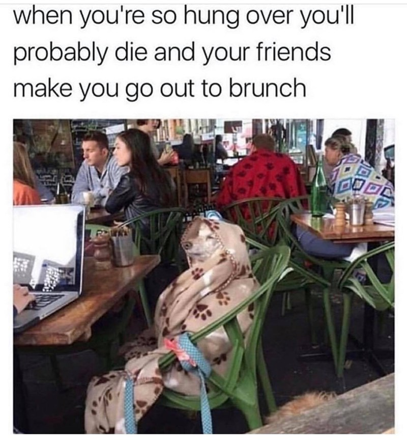 """Caption that reads, """"When you're so hungover you'll probably die and your friends make you go out to brunch"""" above a photo of a dog wrapped in a blanket sitting on a chair in a restaurant"""