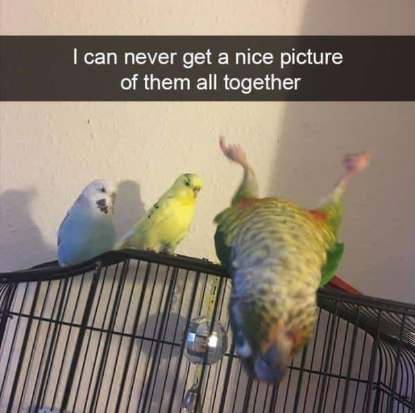"Funny Snapchat text that reads, ""I can never get a nice picture of all of them together"" above a photo of three little parakeets"