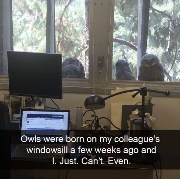 Technology - Owls were born on my colleague's windowsill a few weeks ago and I. Just. Can't. Even.