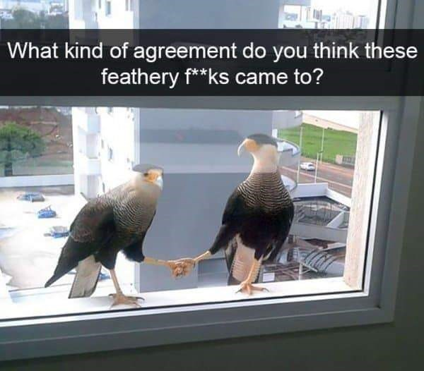 Bird - What kind of agreement do you think these feathery f**ks came to?