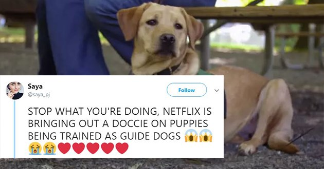 Dogumentary Following Puppies Training To Be Guide Dogs Now On Netflix