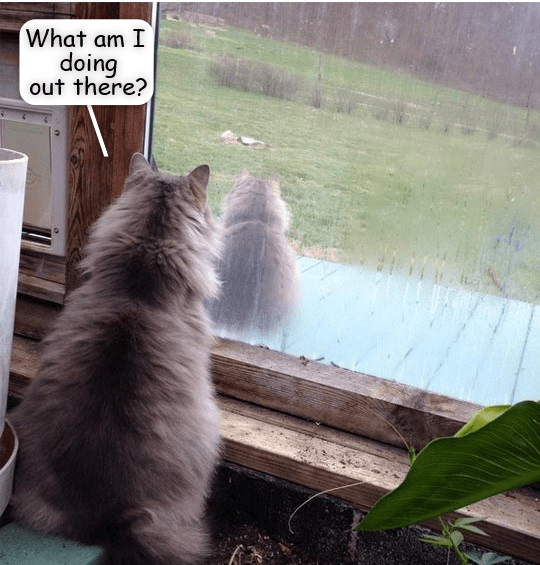 cat meme - Cat - What am I doing out there?