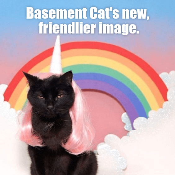 black cat wearing a pink wig and a unicorn horn in front of a rainbow