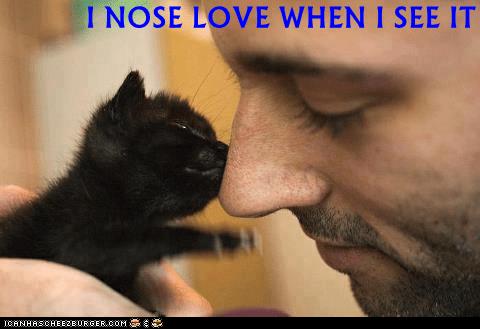 cat meme - Nose - I NOSE LOVE WHEN I SEE IT ICANAASCHEEZERGER.C0M