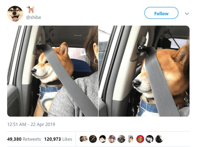 Vehicle door - Follow @shibe 12:51 AM - 22 Apr 2019 49,380 Retweets 120,973 Likes