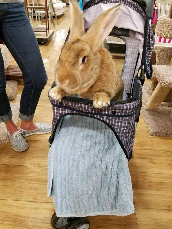 cute animals - Rabbit