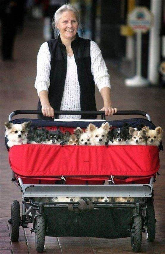 cute animals - Vehicle