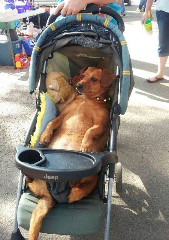 cute animals - Baby carriage - Jeep