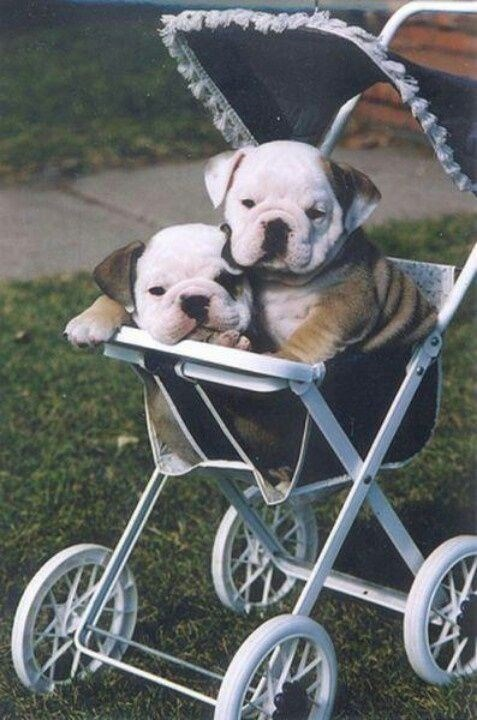 cute animals - Baby carriage