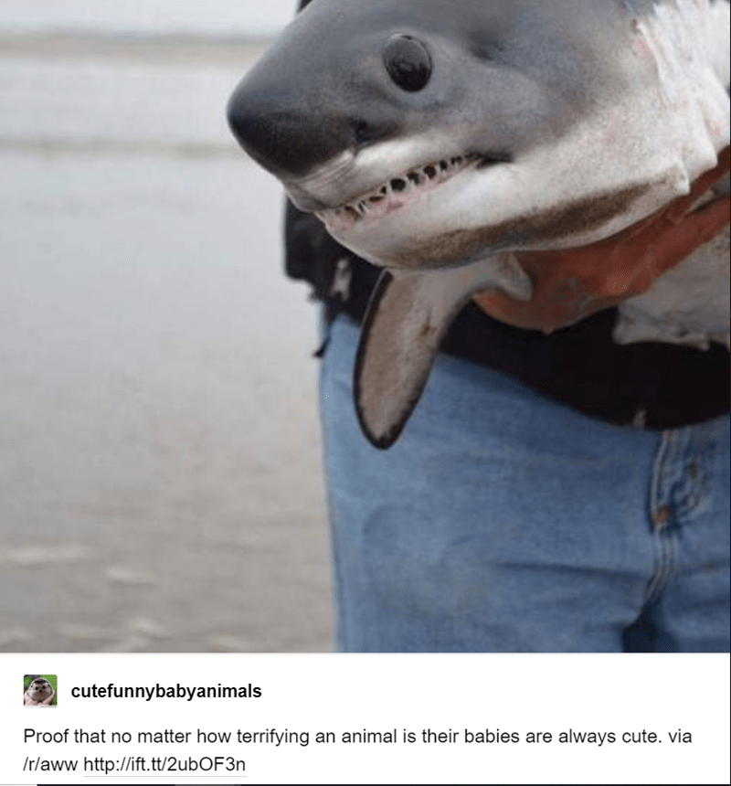 baby animals - Fish - cutefunnybabyanimals Proof that no matter how terrifying an animal is their babies are always cute. via /r/aww http://ift.tt/2ubOF3n
