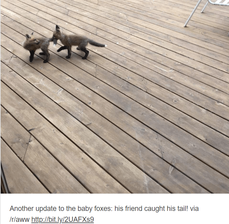 baby animals - Deck - Another update to the baby foxes: his friend caught his tail! via /rlaww http://bit.ly/2UAFX$9