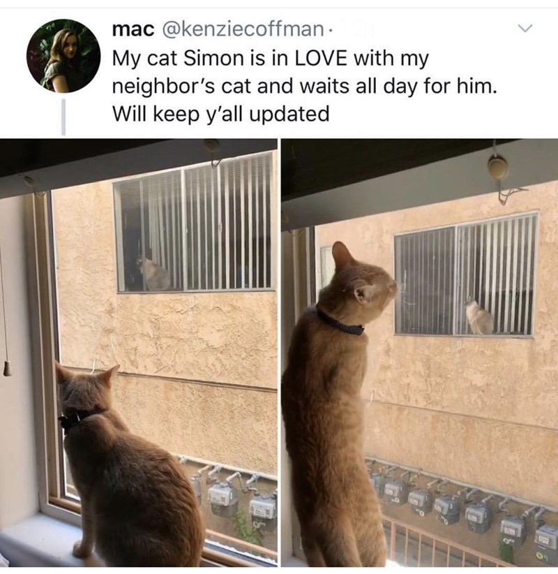 Cat - mac @kenziecoffman My cat Simon is in LOVE with my neighbor's cat and waits all day for him. Will keep y'all updated