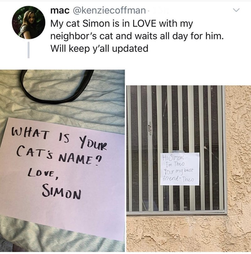 Text - mac @kenziecoffman My cat Simon is in LOVE with my neighbor's cat and waits all day for him. Will keep y'all updated WHAT IS YDUR CATS NAME ? HiSimans Im Theo Tour my best froend Theo LOVE, SIMON