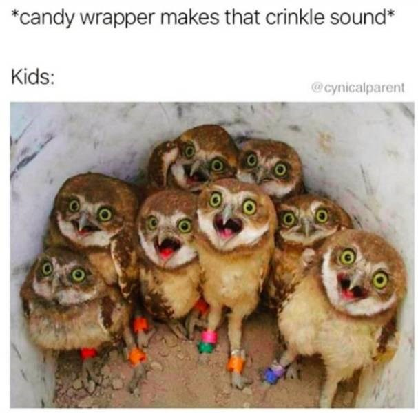 Vertebrate - *candy wrapper makes that crinkle sound* Kids: @cynicalparent