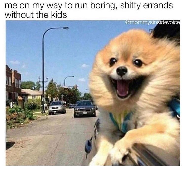 Dog - me on my way to run boring, shitty errands without the kids @mommysinsidevoice