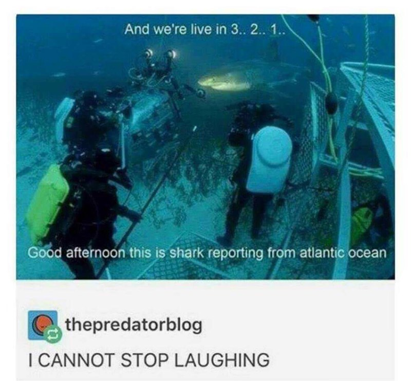 meme - Organism - And we're live in 3.. 2.. 1. Good afternoon this is shark reporting from atlantic ocean thepredatorblog I CANNOT STOP LAUGHING