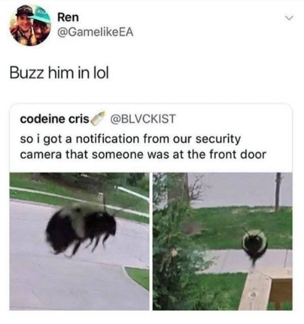 close up of bee hovering near camera so i got a notification from our security camera that someone was at the front door