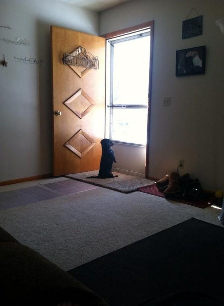 cute animals - Room - tove