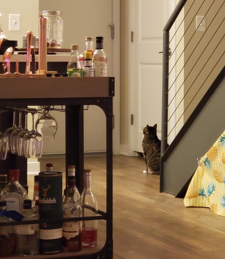 cute animals - Room - anfiddich ACTIN REEK 12